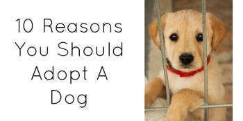 adopt_a_dog