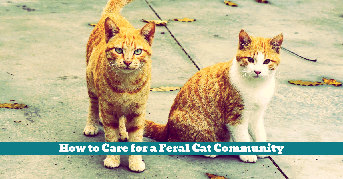 Cat_Feral_Vaccinated_Neutered_Population_Control