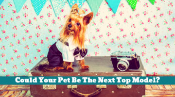 Could Your Pet Be The Next Top Model?