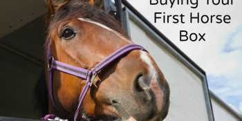 A Handy Guide to Buying Your First Horse Box