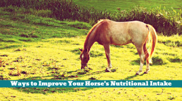 Ways to Improve Your Horse's Nutritional Intake