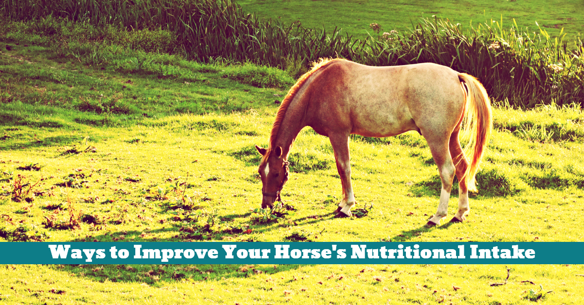 Horse_Nutrition_Intake_Supplement