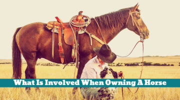 What Is Involved When Owning A Horse