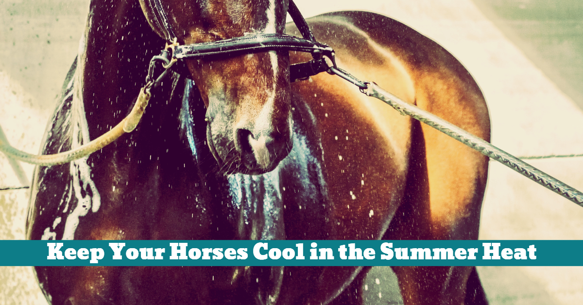 Horse_Cooling_Water_Spray_Hose_Summer