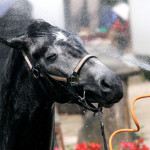 Keep Your Horses Cool in the Summer Heat