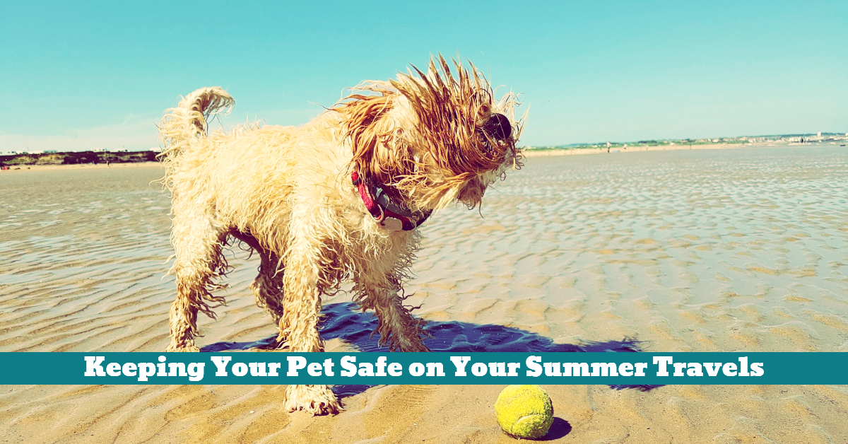 Pet_Summer_Vacation_Travel_Safety