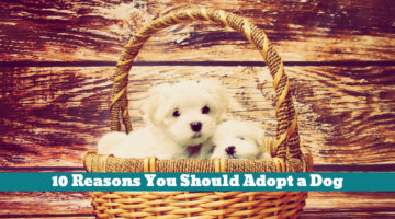 10 Reasons You Should Adopt a Dog