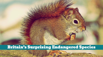 Britain's Surprising Endangered Species