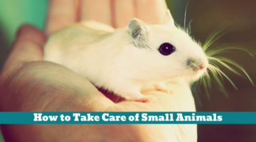 How to Take Care of Small Animals