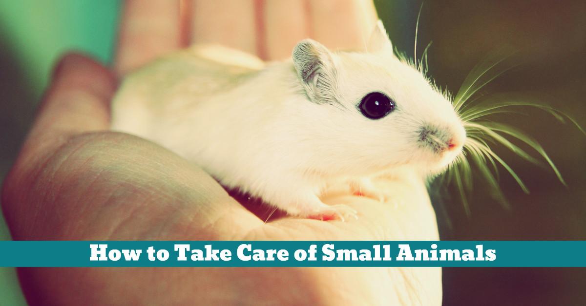 Pet_Small_Care_Handling_Bedding_Sleep_Nest