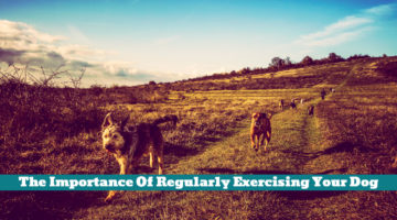 The Importance Of Regularly Exercising Your Dog