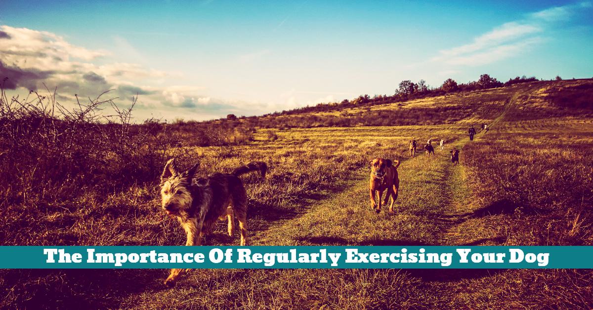 Dog_Exercise_Outdoors_Workout_Treats_Toys