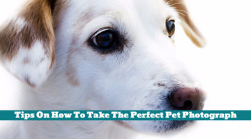 Tips On How To Take The Perfect Pet Photograph