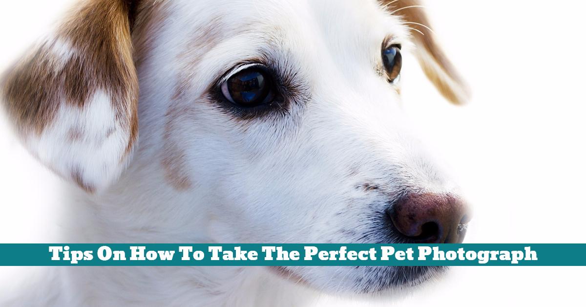 Pet_Photography_Portrait_Professional
