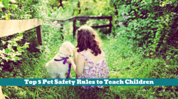 Top 5 Pet Safety Rules to Teach Children