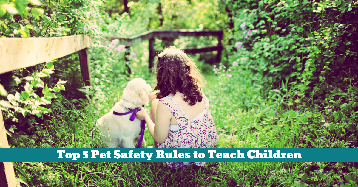 Pet_Safety_Rules_Children_Hygiene_Care_Supervision