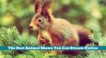 The Best Animal Shows You Can Stream Online