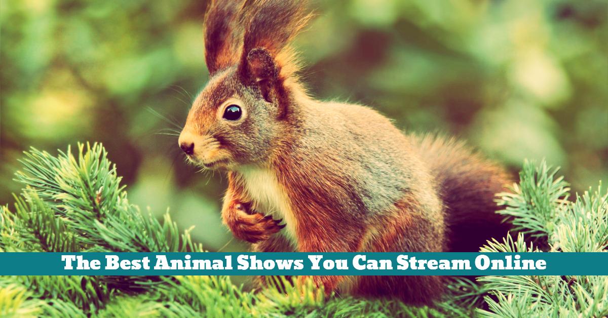 Online_Streaming_Animal_Shows_Wildlife_Nature_Programs