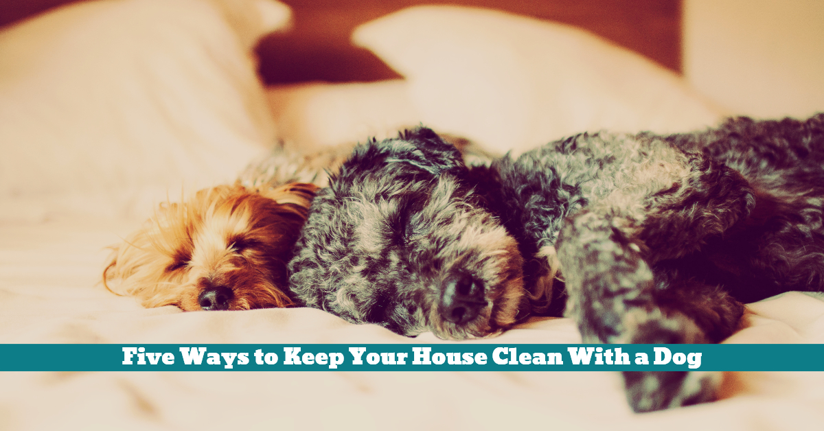 Dog_House_Clean_Vacuum_Boundaries_Antibacterial