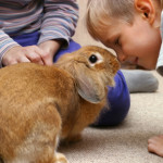 How to Encourage Toddlers to Play Nice With Pets
