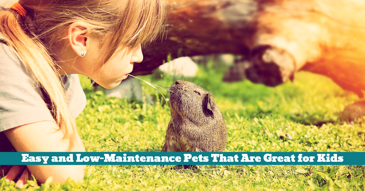 Pets_Small_Kids_Manageable_Easy_Care_Low_Maintenance