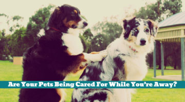 Are Your Pets Being Cared For While You're Away?