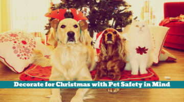 Decorate for Christmas with Pet Safety in Mind