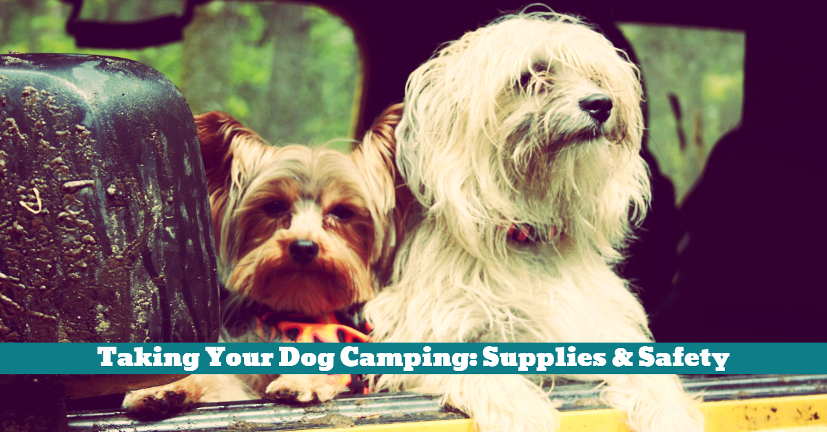 Dog_Camping_Trip_Outdoors_Supplies_Backpack_Tent_First_Aid_Kit