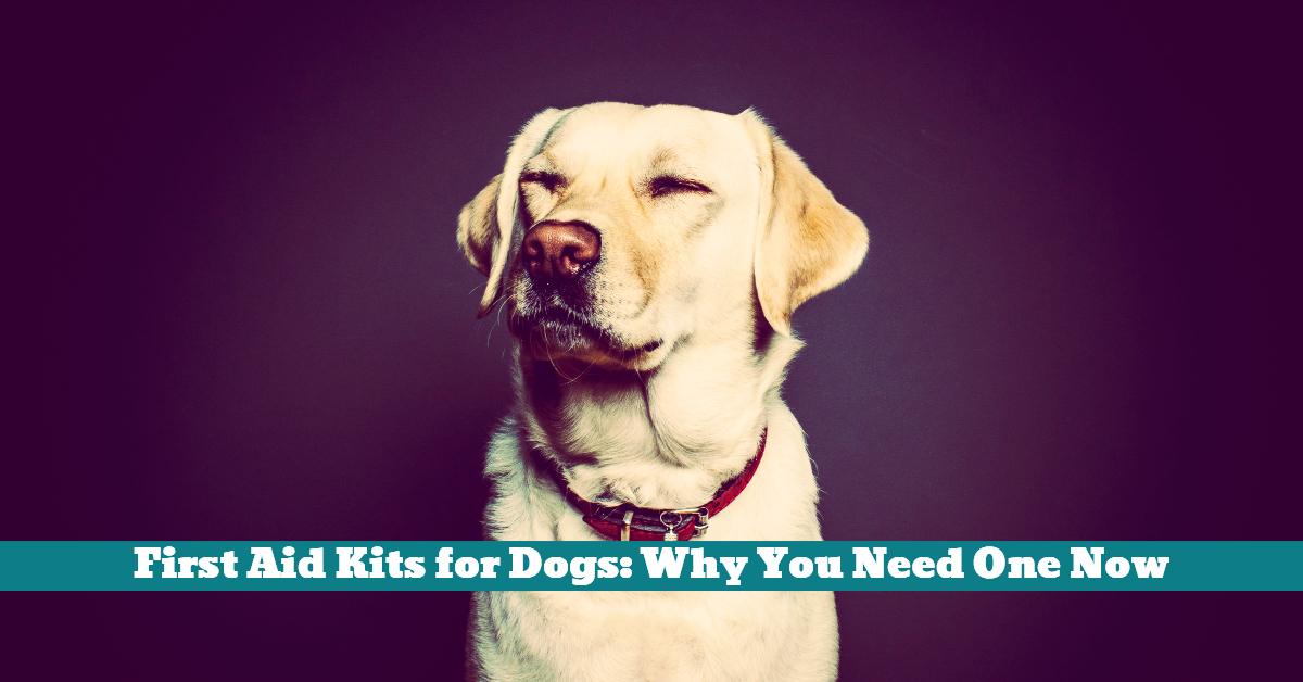 Dog_First_Aid_Kit