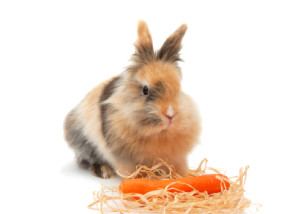 cute little rabbit with carrot