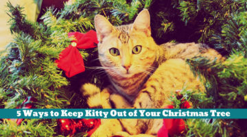 5 Ways to Keep Kitty Out of Your Christmas Tree