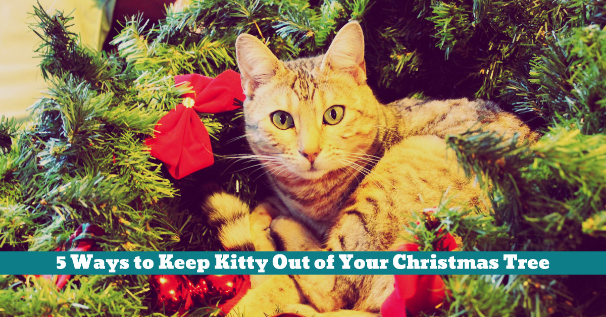 Cat_Xmas_Tree_Repellent_Ornaments_Safety
