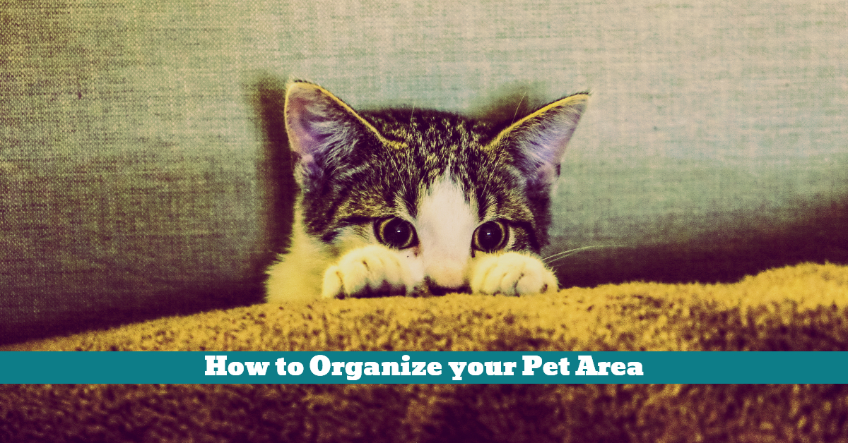 Pet_Space_Area_Indoor_Outdoor_Storage_Box_Shelter