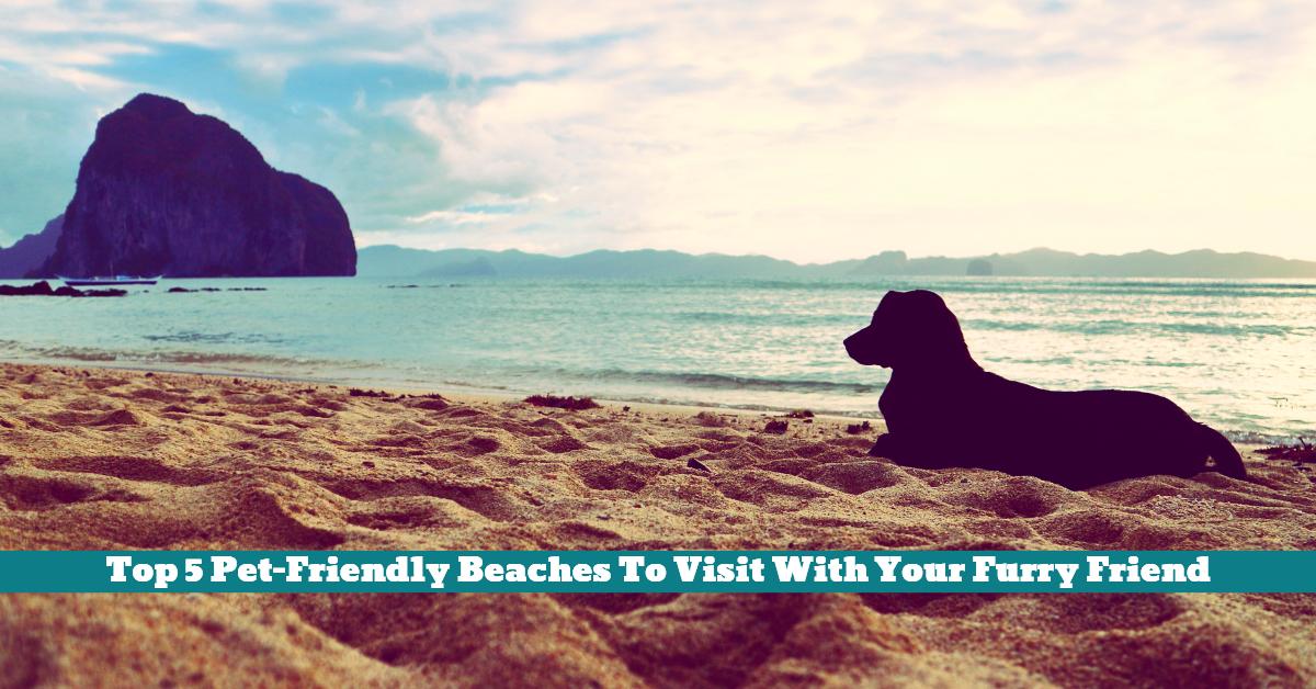 Pet_friendly_Beach