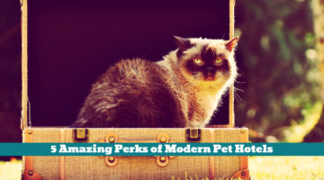 5 Amazing Perks of Modern Pet Hotels
