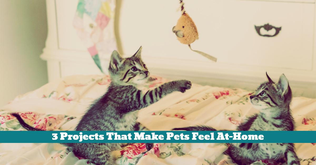 Pet_Personal_Space_Cat_Den_Dog_House_Rabbit_Playpen