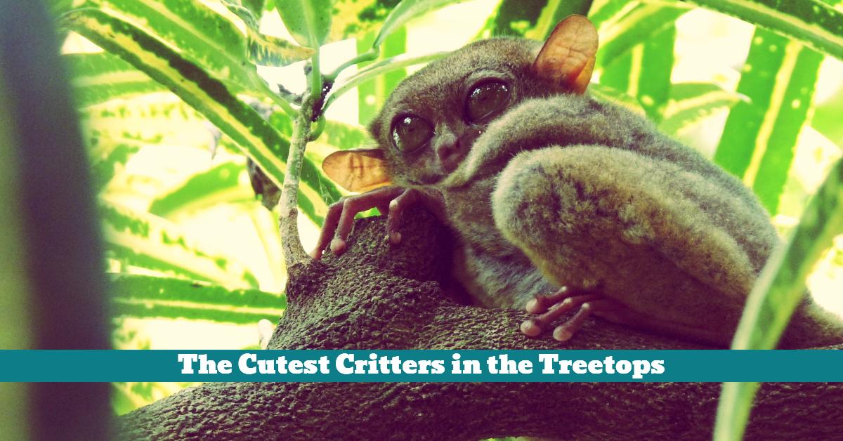 Animals_Critters_Wild_Forest