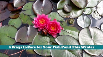 4 Ways to Care for Your Fish Pond This Winter