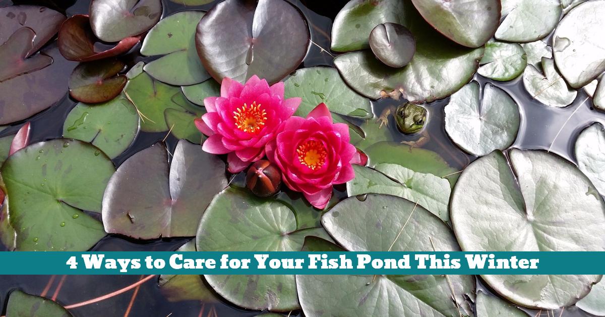 Fish_Pond_Ice_Filter_Pump_Plants_Debris