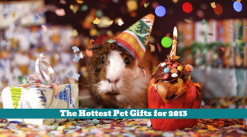 The Hottest Pet Gifts for 2013