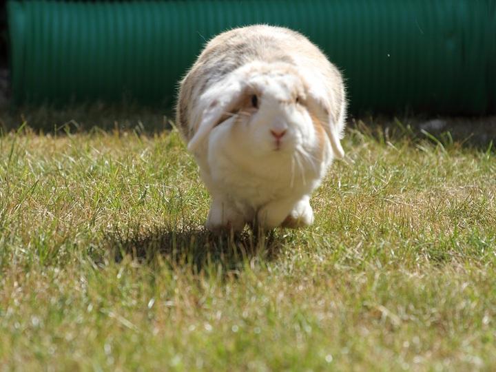 Tilly_running
