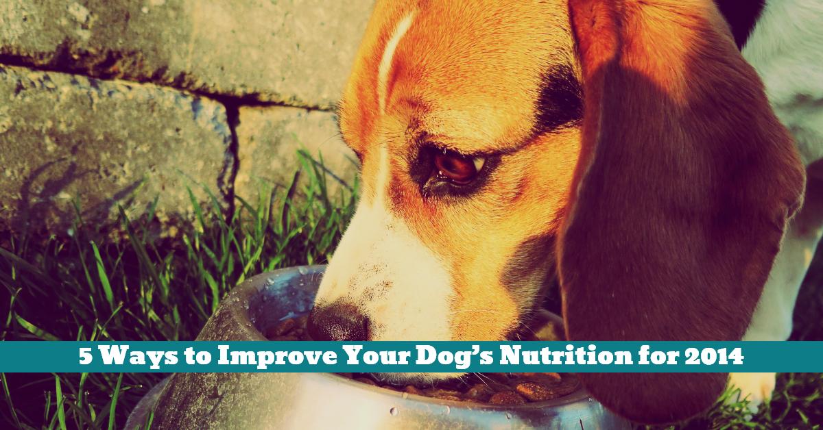 Dog_Nutrition_Antioxidants_Carbohydrates _Health_Growth