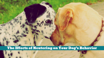 The Effects of Neutering on Your Dog's Behavior