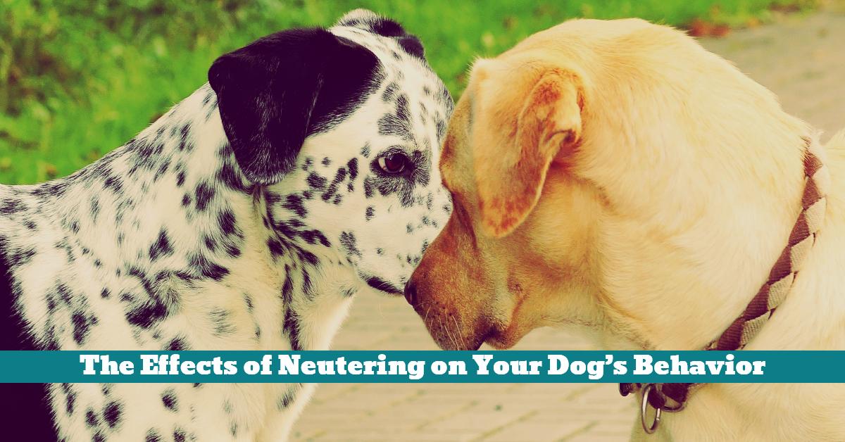 Dog_Neutering_Neuter_Behavior_Breeding