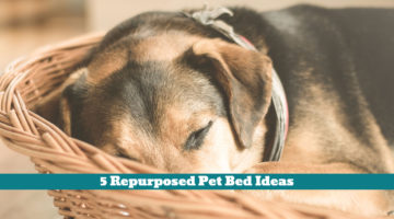 5 Repurposed Pet Bed Ideas
