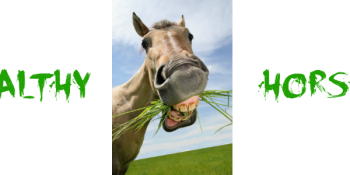 5 Easy Ways to Keep Your Pet Horse Very Happy