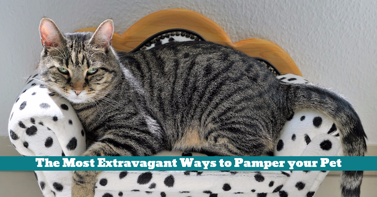 Pet_Pamper_Extravagant_Treats_Food_Love_Health