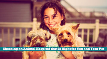 Choosing an Animal Hospital that is Right for You and Your Pet