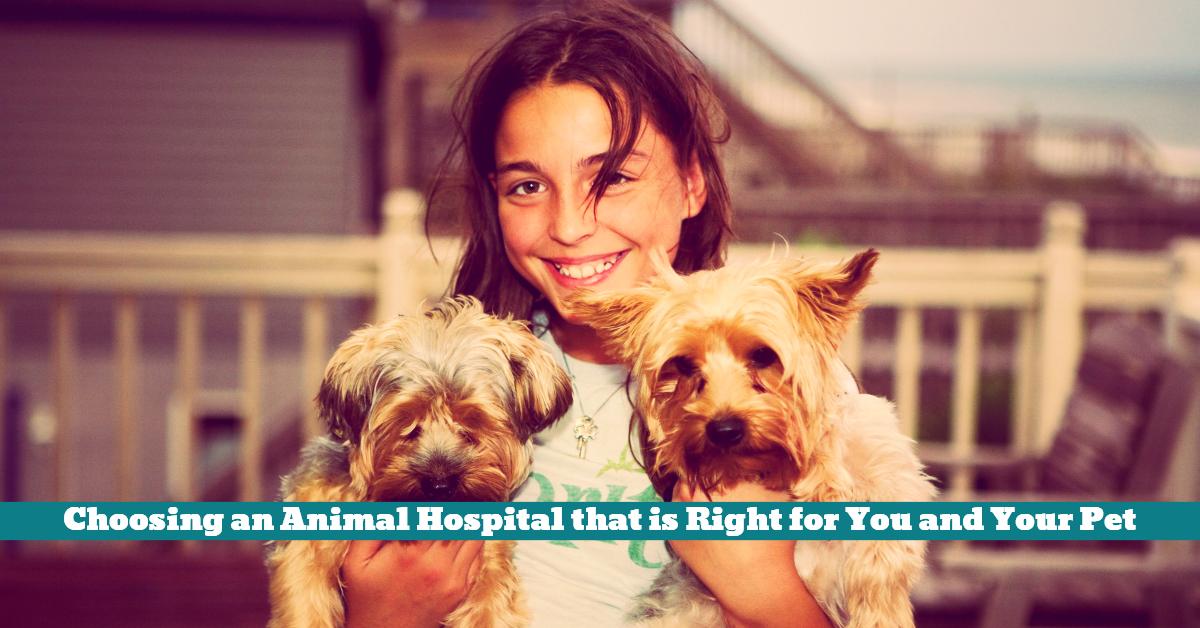 Pet_Care_Hospital_Vet_Surgery