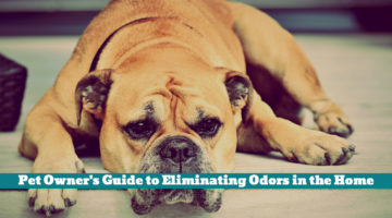 Pet Owner's Guide to Eliminating Odors in the Home